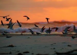 oiseaux-birds-Gabon