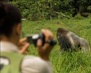 Gorille-Gabon